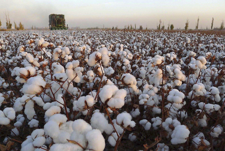 cotton culin plan ahead - HD1500×1003