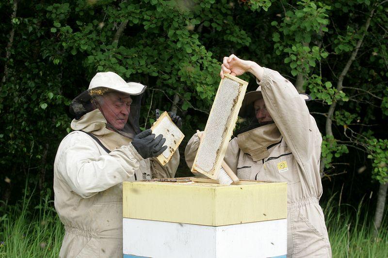 """Šerkšnų bityno šeimininkai, gaminantys medų su """"Šerkšno medaus"""" prekės ženklu, sako, kad šįmet išsuko apie 15 t medaus. ALGIMANTO BARZDŽIAUS NUOTR."""
