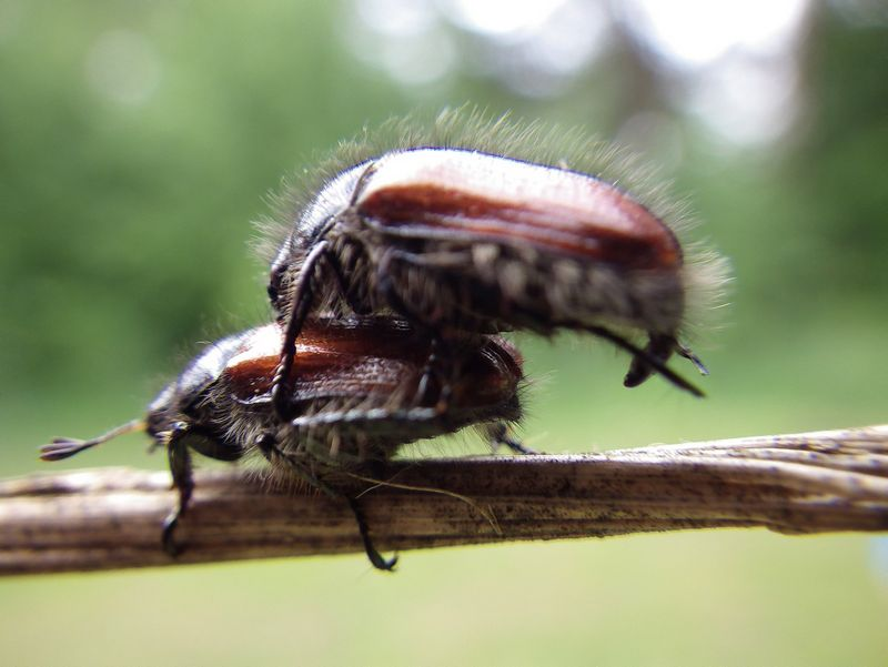 Europos Parlamentui pakeitus maisto produktų gamybą reglamentuojančius teisės aktus, maisto produktuose būtų  galima naudoti vabzdžius ir klonuotų gyvūnų mėsą. Vladimiro Ivanovo nuotr.
