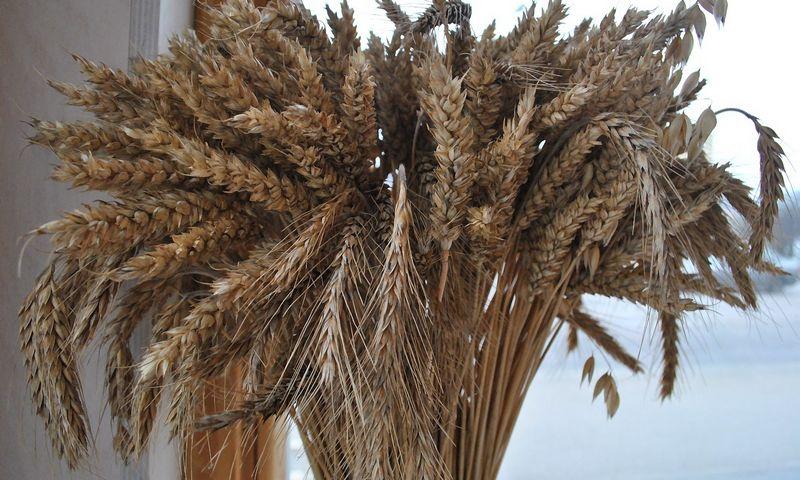 Ankstesniais metais į Iraną keliavo 40% lietuviškų grūdų eksporto. Šiemet mus iš ten stumtelėjo rusai ir ukrainiečiai. Rimos Aukštuolytės nuotr.