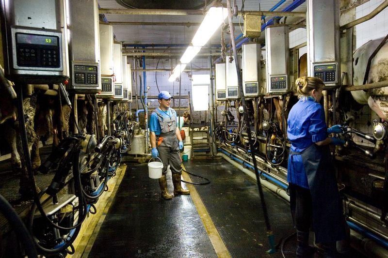 Rinktis technologijas, leidžiančias gaminti tik standartinę aukščiausios kokybės produkciją, žemdirbius spaudžia maisto pramonė, nustatanti grūdų ir kitų maisto produktų standartus. Vladimiro Ivanovo (VŽ) nuotr.