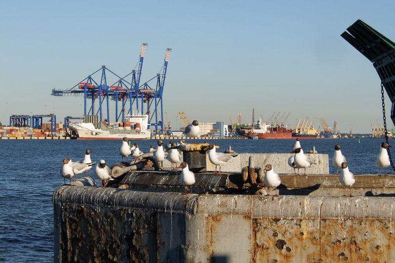 Iš 2014–2020 m. Europos Sąjungos finansavimo laikotarpio Klaipėdos uostas projektams įgyvendinti turėtų sulaukti 215 mln. Eur paramos.  Algimanto Kalvaičio nuotr.