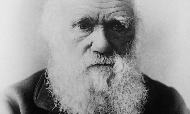 """Charlesui Darwinui itin patiko žongliruoti keliais darbais vienu metu. """"Wikipedios"""" nuotr."""