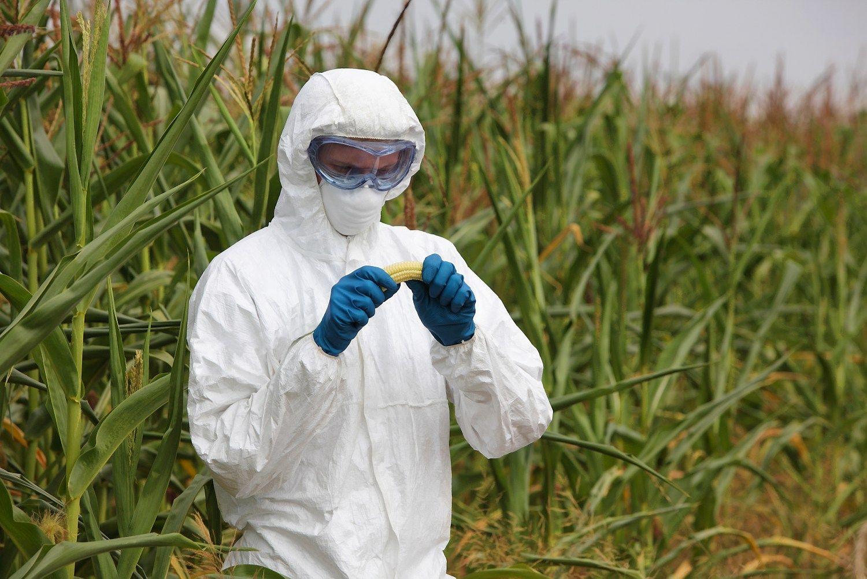 Nauji augalininkyst�s metodai: GMO ar ne GMO
