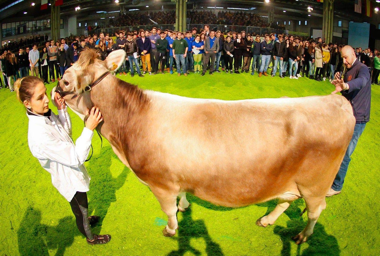 �em�s �kio parodoje Italijoje renkami gra�iausi gyvuliai