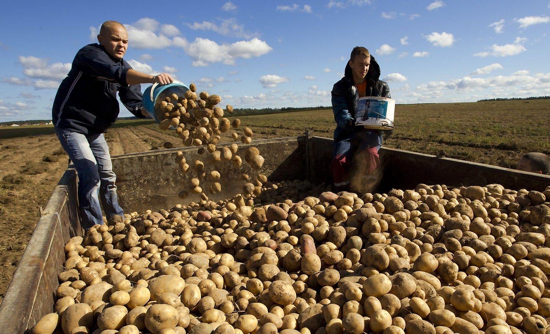Derlingumo �em�lapis: kur geriausia auginti bulves, rapsus ir cukrinius runkelius