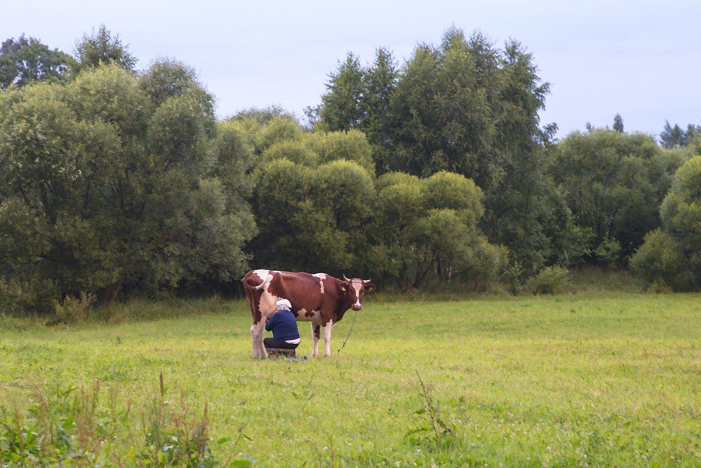 Pieno supirkimo kainų įstatymas neteko galios nė neįsigaliojęs