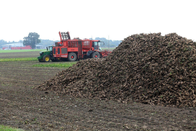 ES paramos iš didžiųjų ūkių neatima