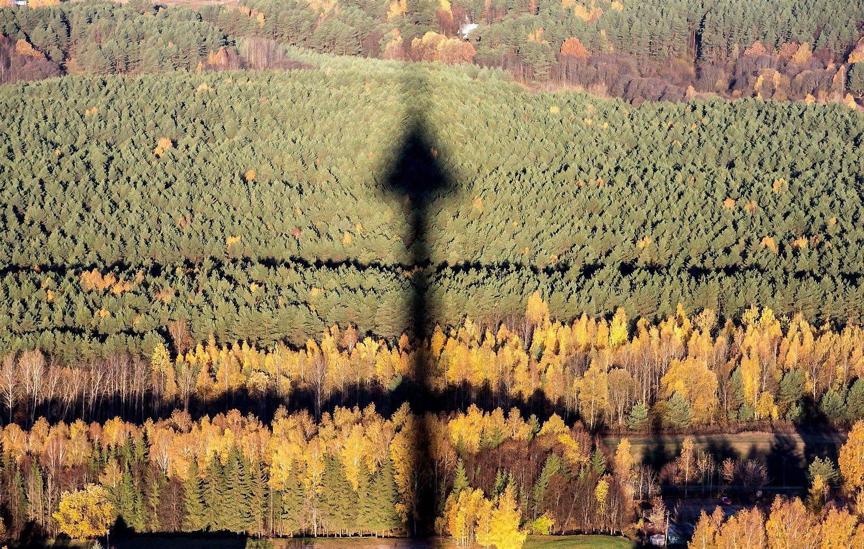 Atmetė siūlymą naikinti Generalinę miškų urėdiją
