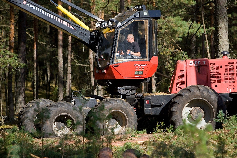VMI paaiškino, kaip apmokestinamos pajamos iš miško pardavimo