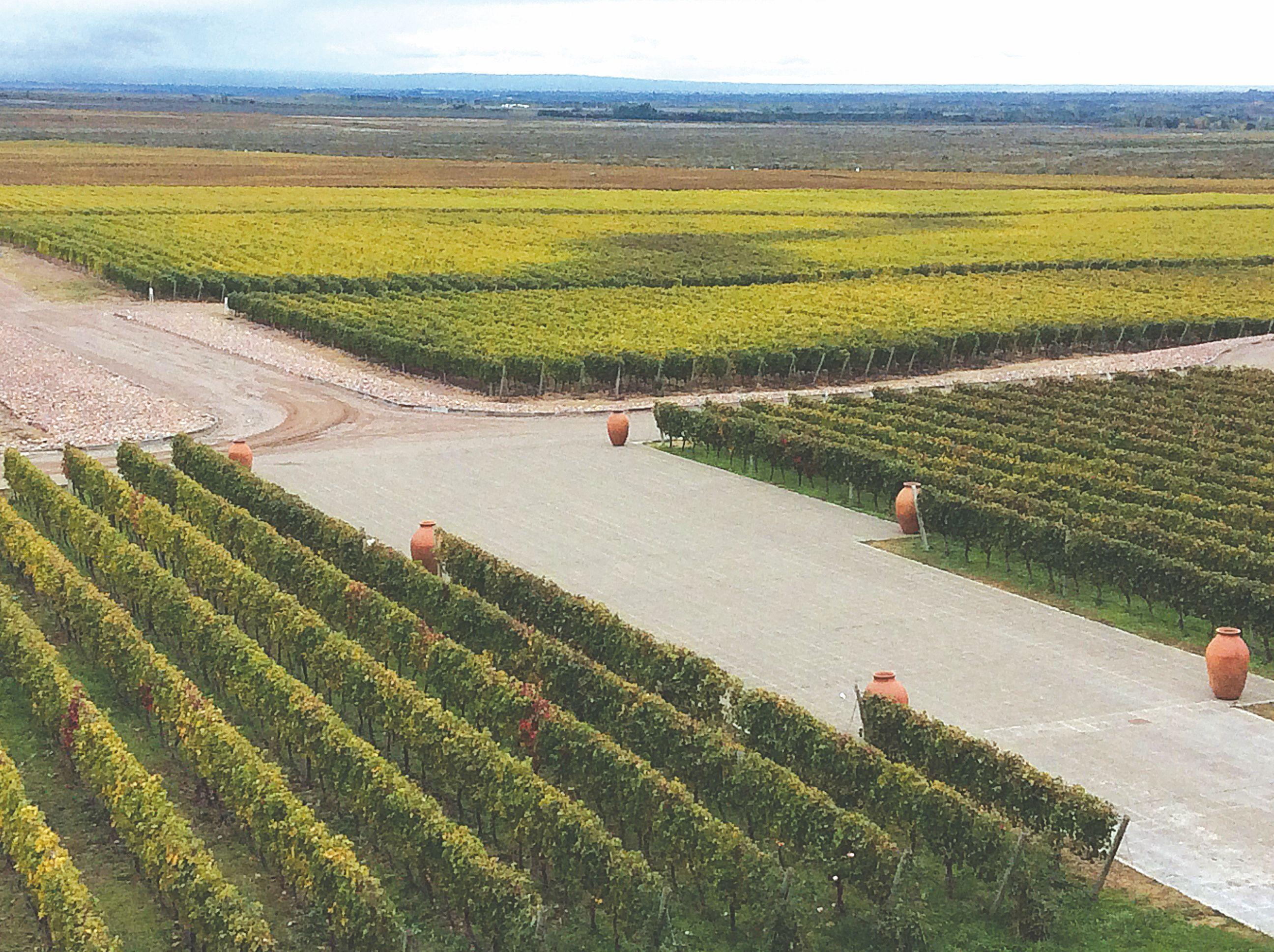 �Argentinos vynas � �alies ekonomikos viltis