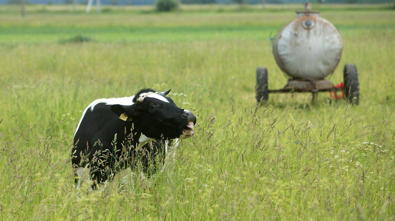 """Smulkūs ūkininkai gali būti atleisti nuo """"Sodros"""" įmokų"""
