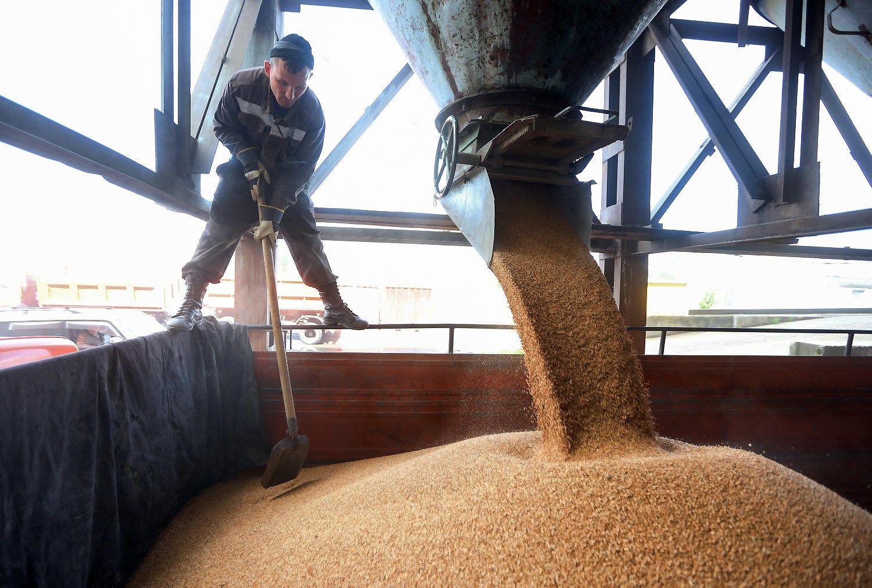 Prekyba kvie�iais: istorija su Egiptu kartojasi, bet eksportas nestoja