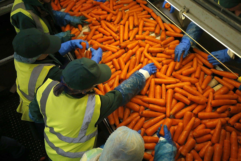 Kaip brit� sprendimas paveiks agroverslo sektori�
