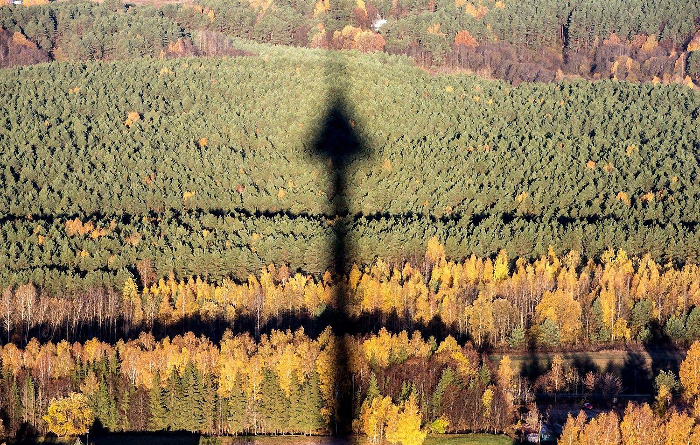 IKEA Baltijos šalyse įsigijo urėdijos dydžio miško valdų