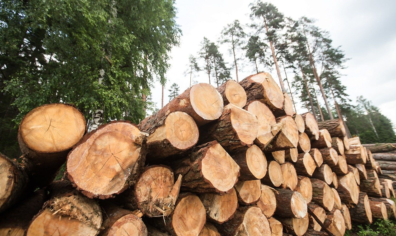 Užsimojo sertifikuoti miškus, bet ne pagal tą kurpalį