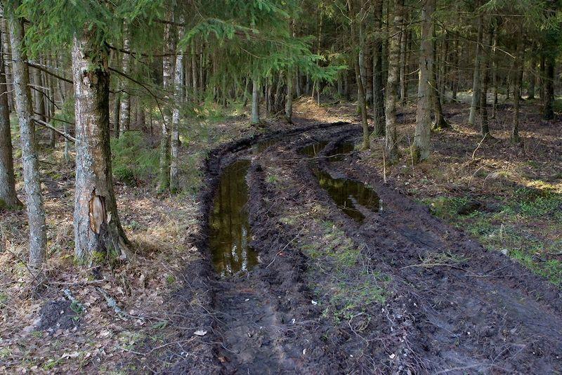 Miško savininkai dar pavasarį įtarė Aplinkos ministeriją meluojant, kad iš 5% apyvartos mokesčio tvarkomi, kaip numatyta pagal mokesčio paskirtį, apgailėtinos būklės esantys miškų keliai.  Juditos Grigelytės (VŽ) nuotr.