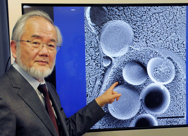Paskelbtas medicinos Nobelio premijos laureatas