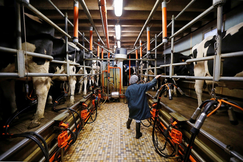Pieno gamintojų reikalai taisosi: kaina pagaliau šovė į viršų