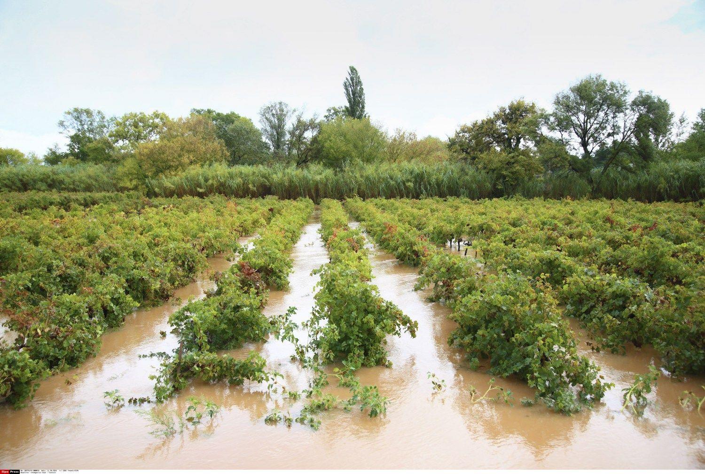 Piet� Pranc�zijoje potvynis skandina vynuogynus