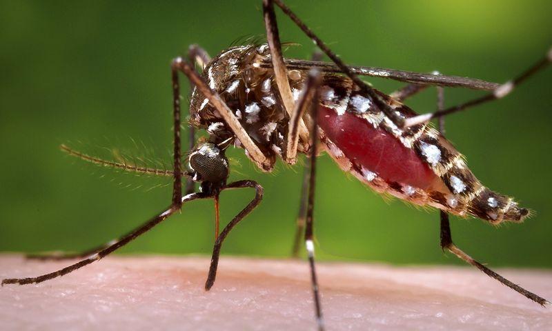 """2015 m. nuo uodų pernešamos maliarijos mirė  830.000 pasaulio gyventojų. """"REUTERS""""/""""Scanpix"""" nuotr."""