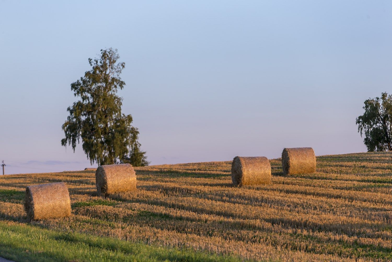 �INVL Baltic Farmland� per 9 m�n. u�dirbo ma�iau