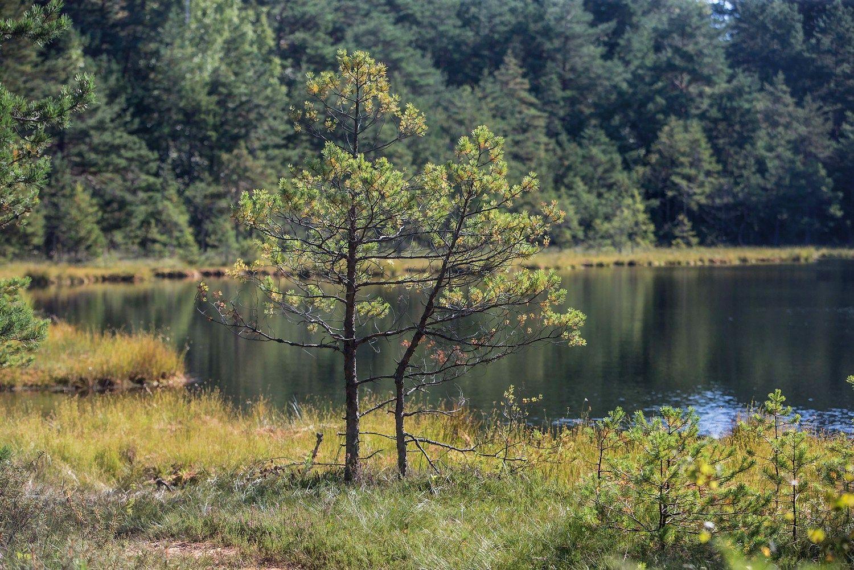 Ūkioidėja: ežero dumbląvers trąšomis ir pašarais