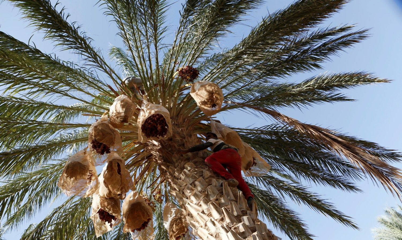 Turkija, Tunisas ir Egiptas kirto Vokietijos turizmo rinkai