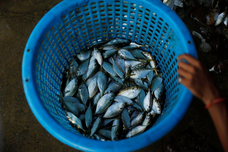 Iš Pekino parduotuvių akvariumų per dieną dingo visos žuvys