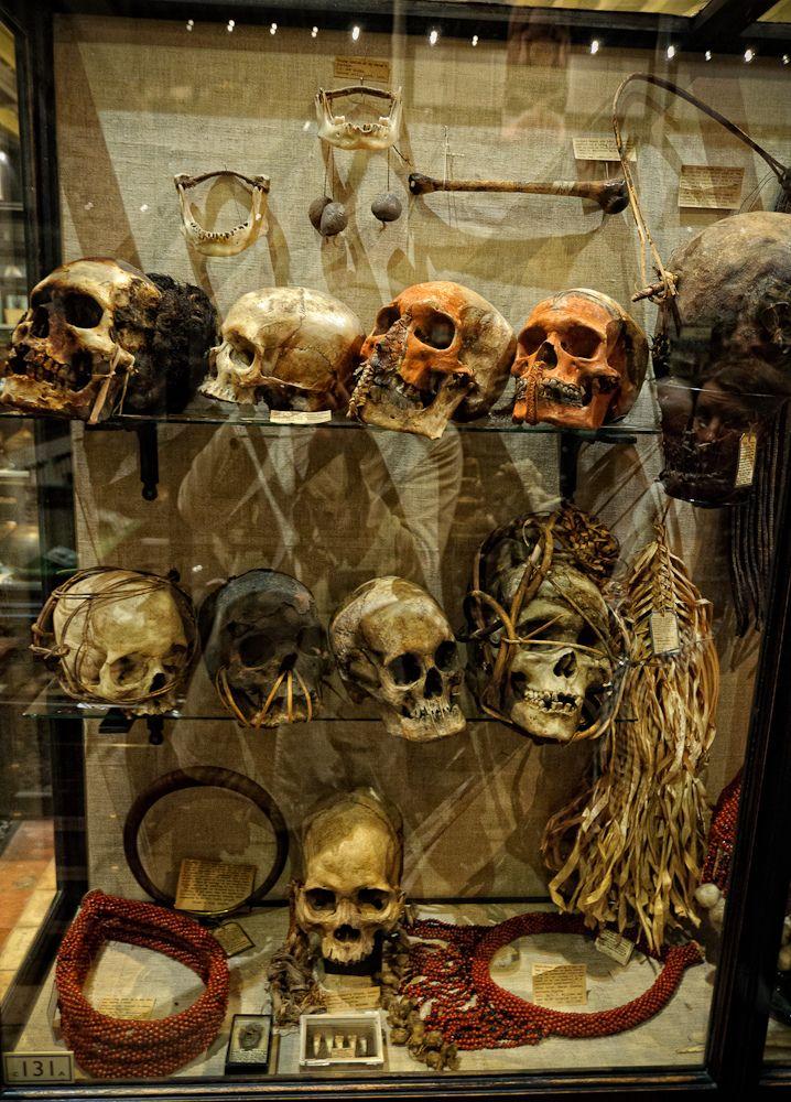 Didžiausias keistenybių muziejus – Oksforde