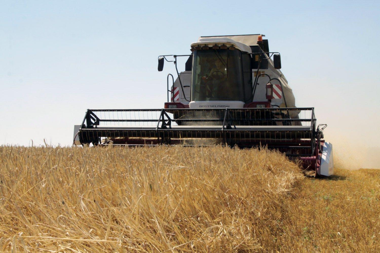 Ukrainos ambicijos grūdų rinkoje: augins ir eksportuos dukart daugiau