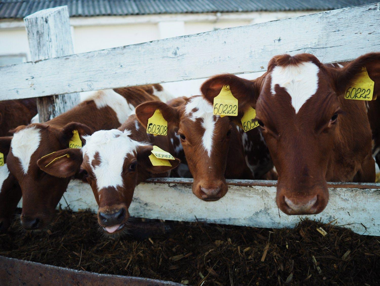 Pieno rinka: tolstame nuo autsaiderių, vejamės lyderes