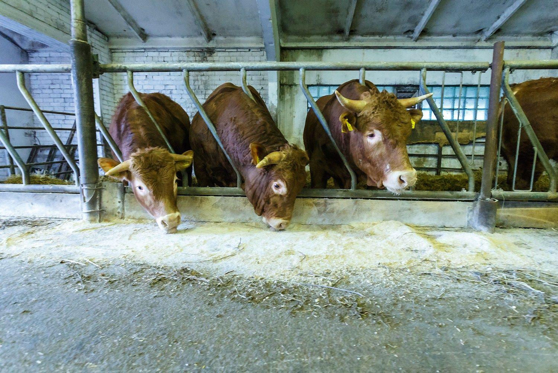 Smuko ir augalininkystės, ir gyvulininkystės produkcijos vertė