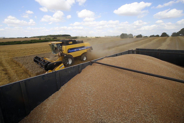 Sparti pradžia ES kviečių eksportuotojams reikš nykią sezono pabaigą