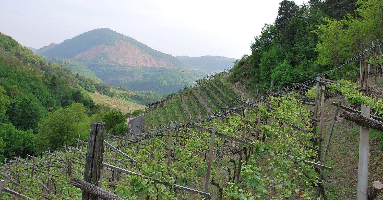 Dolomitinių Alpių kalnų šlaituose vietos vyndariai išnaudoja kiekvieną tinkamą žemės metrą. Beatričės Laurinavičienės nuotr.