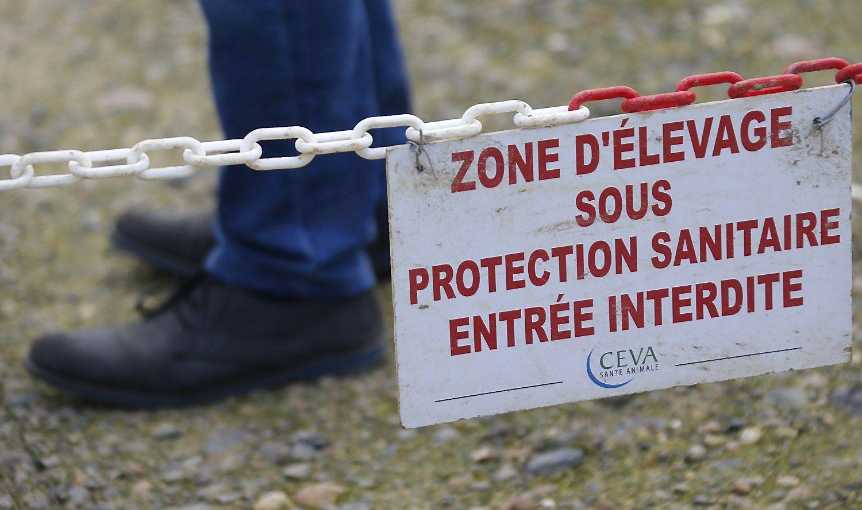 Prancūzija užsakė išskersti beveik milijoną ančių