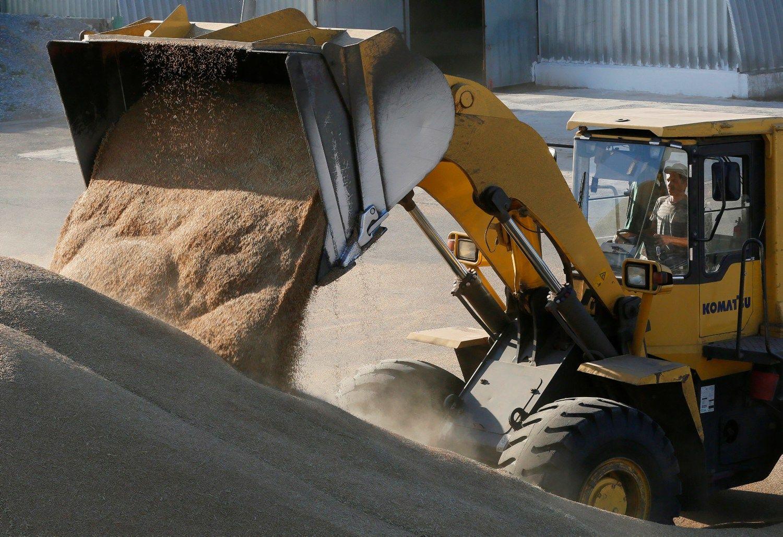 Ralis įgauna pagreitį: kviečių kaina šuoliuoja į viršų
