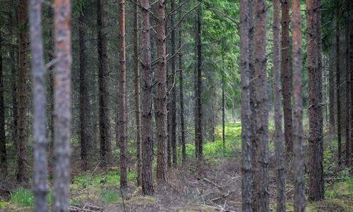 Prezidentūra: miškų urėdijų privalės likti mažiau