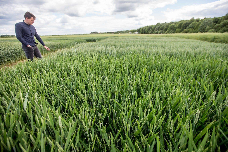 Pasėlius šiemet jau apdraudė apie 400 ūkininkų