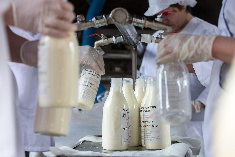 Perdirbėjai: šiemet pieno kainos neturėtų viršyti pernykščių