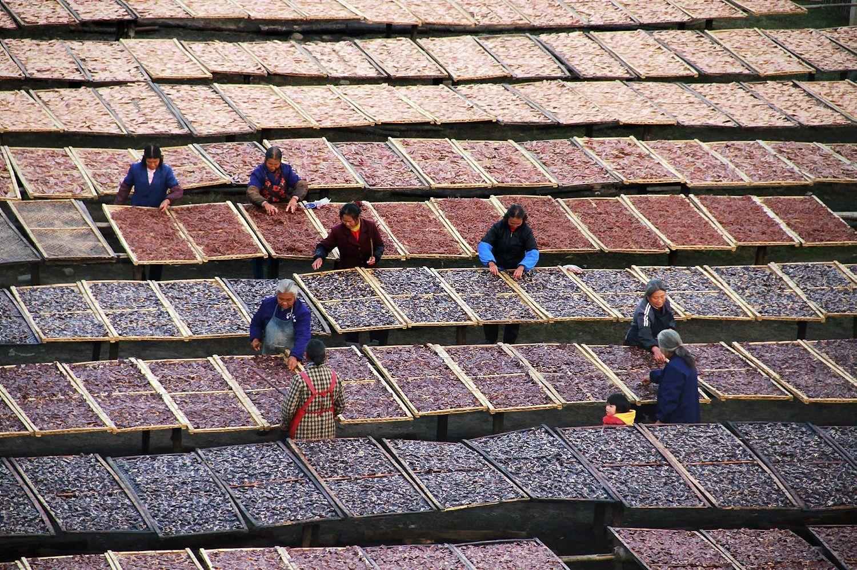 Kinai kuria dar vieną agroverslo milžinę