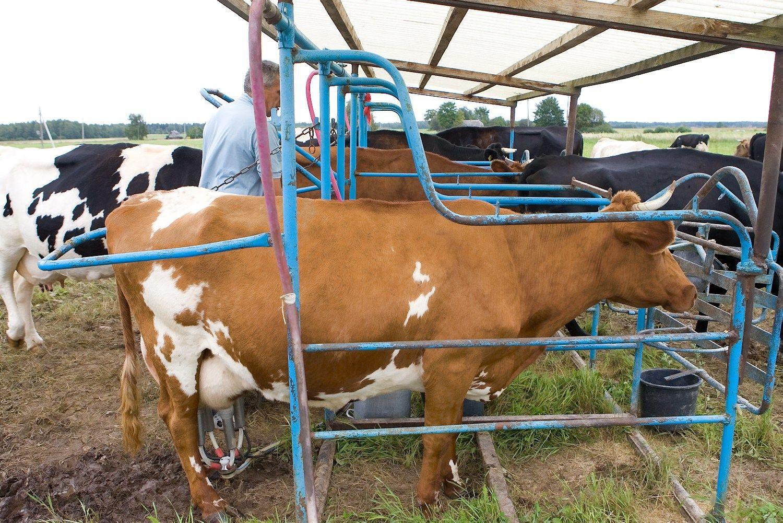 Per metus žemės ūkio produktų supirkimo kainos padidėjo 7,5%