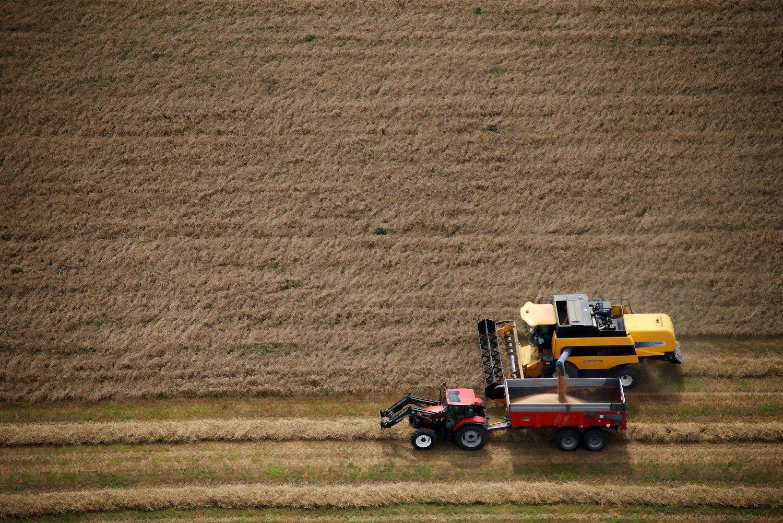 Prognozuoja menkesnį kviečių derlių