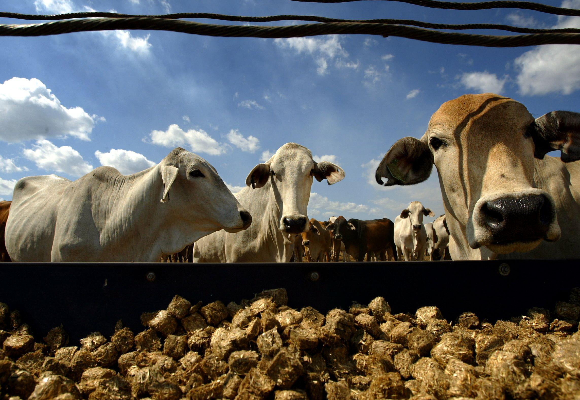 """Vos galą su galu prieš kelerius metus sudūrę ūkiai šiandien tampa investuotojų geidžiamais objektais. Timo Wimborne'o (""""Reuters"""" / """"Scanpix"""") nuotr."""