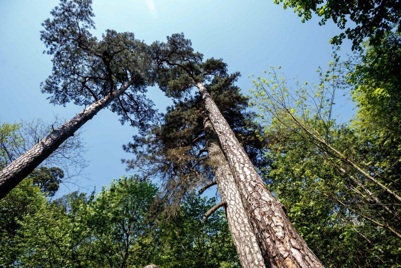 Aplinkos ministerija ramina: masinių atleidimų urėdijose nebus