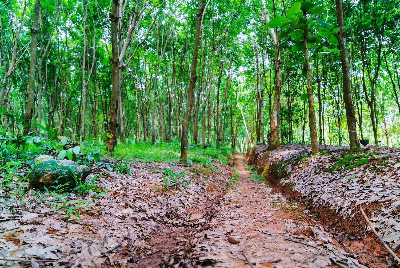 Miškininkystės pertvarka skurdins regionus