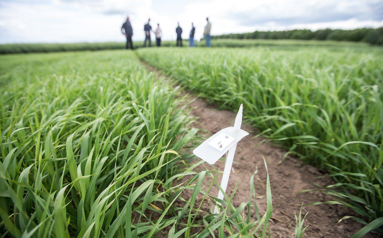 """""""INVL Baltic Farmland"""" uždirbo daugiau ir siūlo didesnius dividendus"""