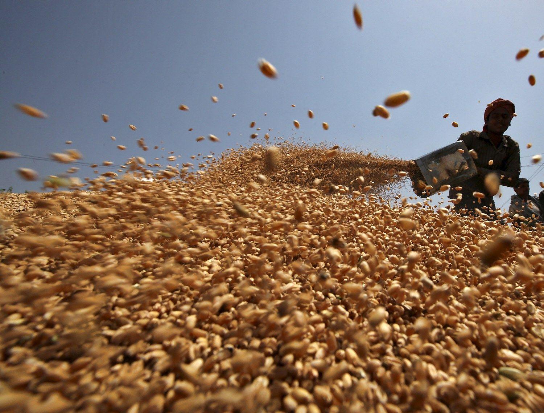 Egiptas šokdina kviečių kainą