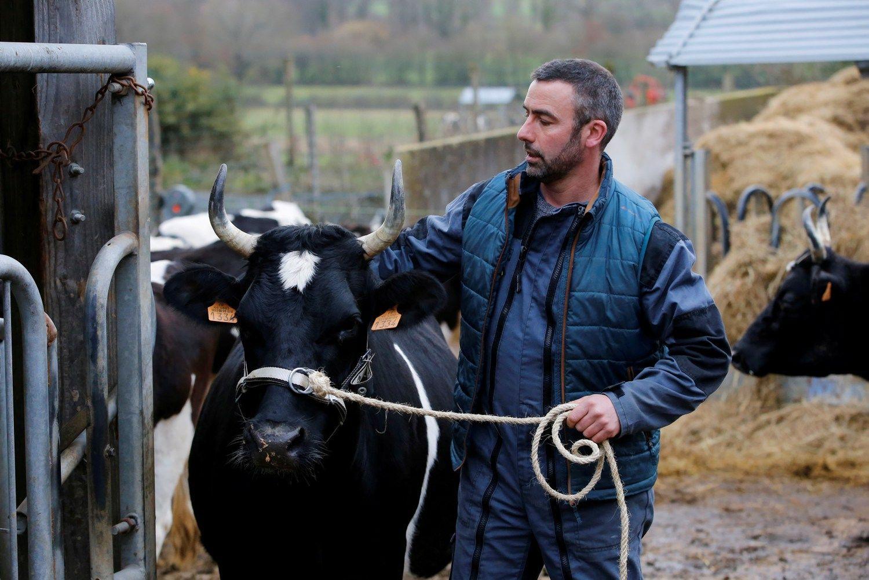 Viena didžiausių pieno perdirbėjų ūkininkams išmokės tryliktąjį atlyginimą