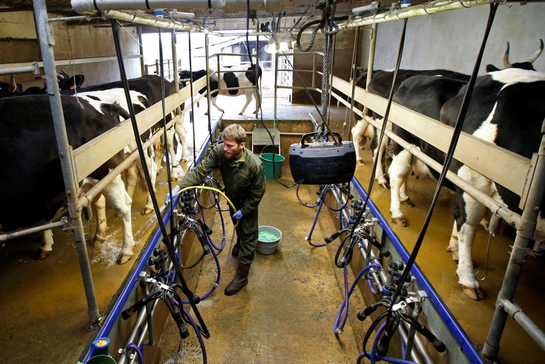 Perdirbėjai: pieno supirkimo kaina mažės